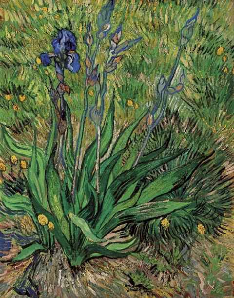 'Iris, The', Oil by Vincent Van Gogh (1853-1890, Netherlands)
