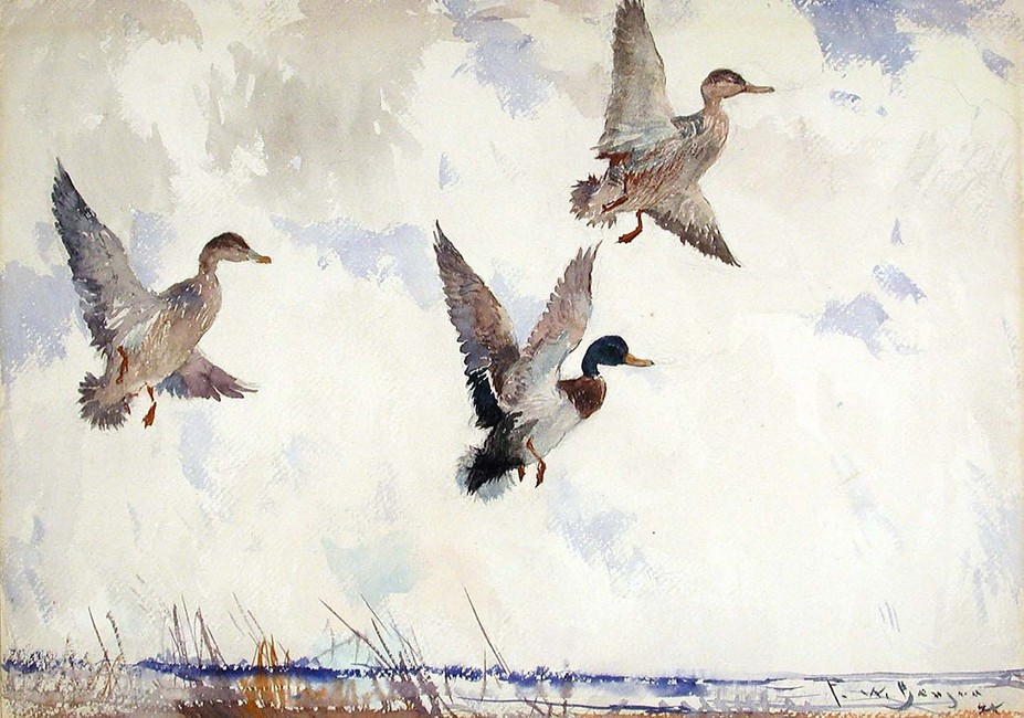 Frank Weston Benson >> Rising Mallards  |  (Watercolor, artwork, reproduction, copy, painting).