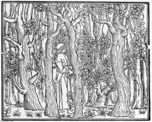 Aldus Pius Manutius