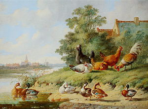 Albertus Verhoesen