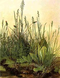 Albrecht Durer - large clumps of grass, Albertina Vienna