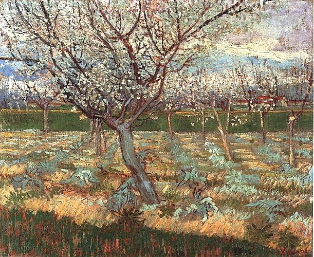 Apricot Trees in Blossom 2, Oil by Vincent Van Gogh (1853-1890, Netherlands)