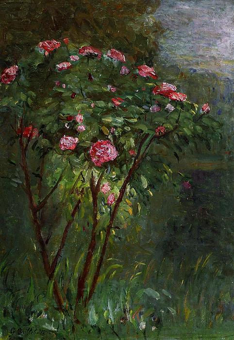 Rose Bush in Flower, Oil On Canvas by Gustave Caillebotte (1848-1894, France)