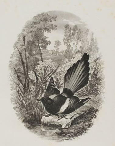 The Magpie, Oil by Charles François Daubigny (1817-1878, France)