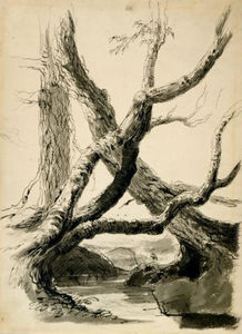 Thomas Cole - Sketch of Tree Trunks
