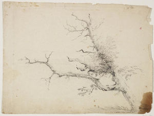 Thomas Cole - Tree6