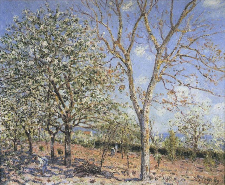 Trees in Bloom, 1889 by Alfred Sisley (1839-1899, France) | Famous Paintings Reproductions | WahooArt.com