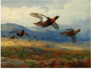 Archibald Thorburn - A Covey Of Grouse In Flight