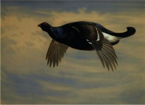 Archibald Thorburn - Blackcock In Flight