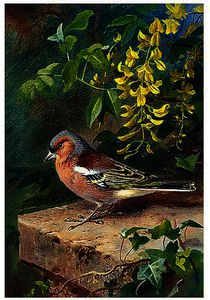 Archibald Thorburn - Chaffinch