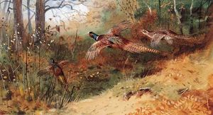 Archibald Thorburn - Cock Pheasants And A Hen Pheasant In Flight