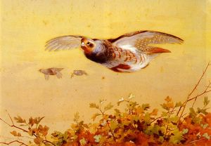 Archibald Thorburn - English Partridge In Flight