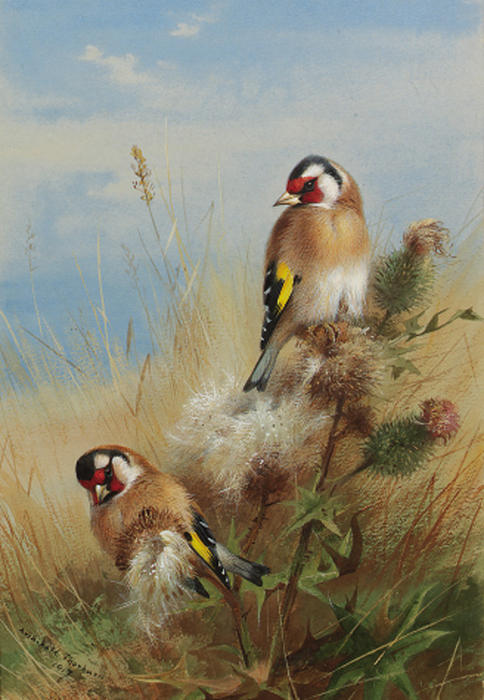 Goldfinches Among Thistles by Archibald Thorburn (1860-1935, United Kingdom) | Reproductions Archibald Thorburn | WahooArt.com
