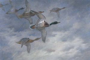 Archibald Thorburn - Mallard In Flight 1