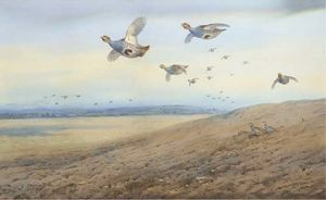 Archibald Thorburn - Partridge In Flight