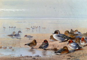 Archibald Thorburn - Pintail, Teal And Wigeon, On The Seashore