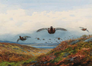 Archibald Thorburn - Red Grouse In Flight Over Moorland