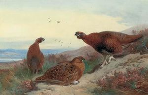 Archibald Thorburn - Red Grouse On A Rocky Outcrop