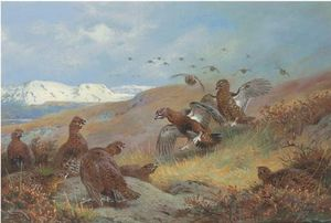 Archibald Thorburn - Red Grouse On Moorland