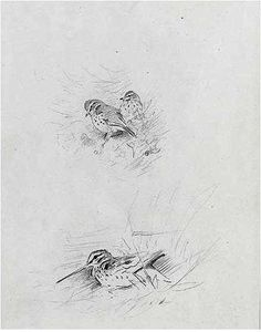 Archibald Thorburn - Snipe And Redwing