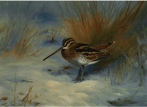 Archibald Thorburn - Snipe In The Snow