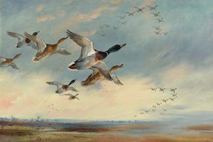 Archibald Thorburn - The Evening Flight. Mallard