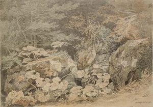 John White Abbott - A study of undergrowth at Chudleigh, Devon
