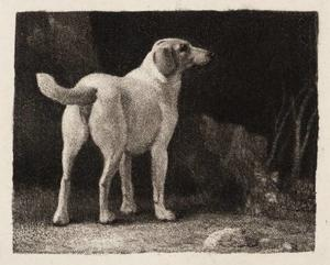 George Stubbs - A Foxhound Viewed from Behind