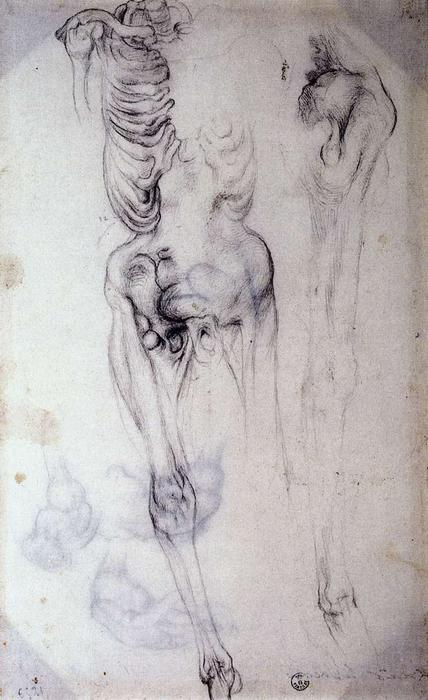 Anatomical study by Jacopo Carucci (Pontormo) (1494-1557, Italy) | WahooArt.com