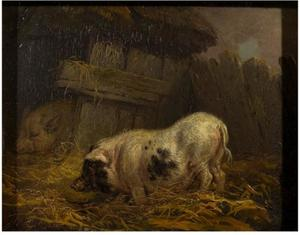 James Ward - A Chinese Sow