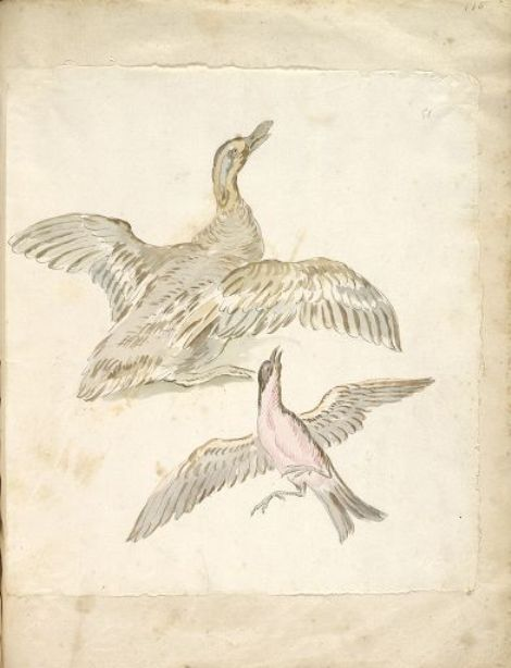 Duck and Bird, both with Wings Extended by Jean-Baptiste Oudry (1686-1755, France) | Oil Painting | WahooArt.com