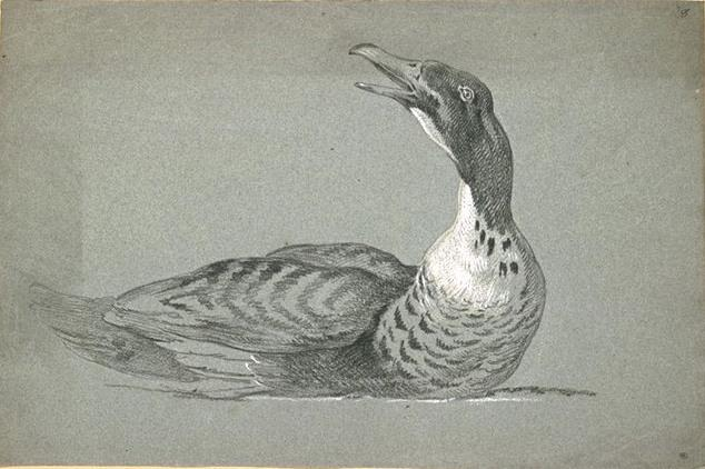 Duck swimming by Jean-Baptiste Oudry (1686-1755, France)