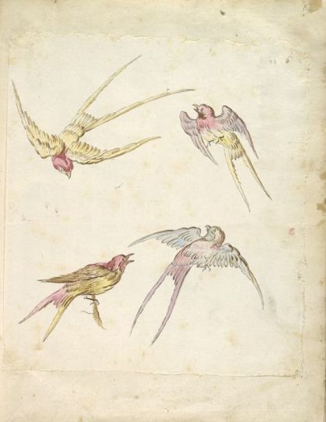 Four Swallows, One Perched and Three in Flight by Jean-Baptiste Oudry (1686-1755, France)