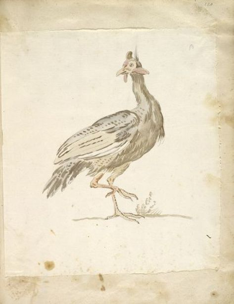 Guinea-fowl by Jean-Baptiste Oudry (1686-1755, France) | Painting Copy | WahooArt.com