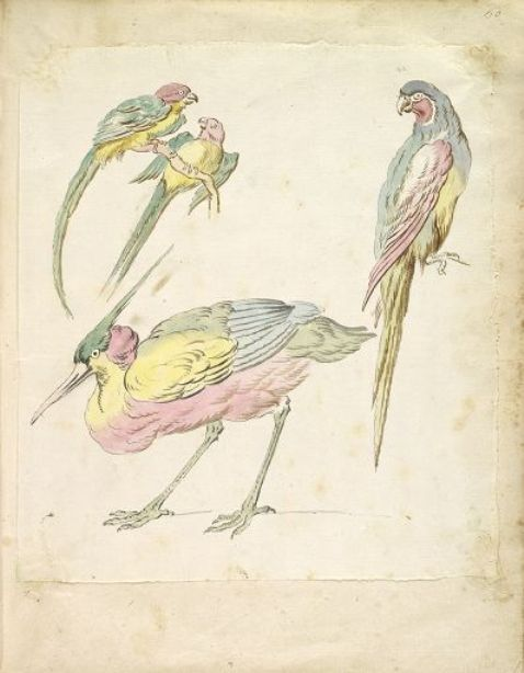 Hunched Heron and Three Perched Parrots by Jean-Baptiste Oudry (1686-1755, France)