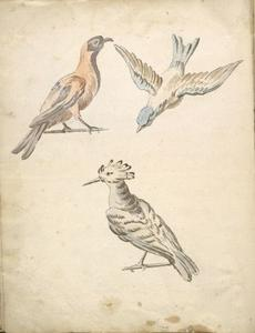 Jean-Baptiste Oudry - Perched Magpie, Perched Woodpecker, and a Bird in Flight