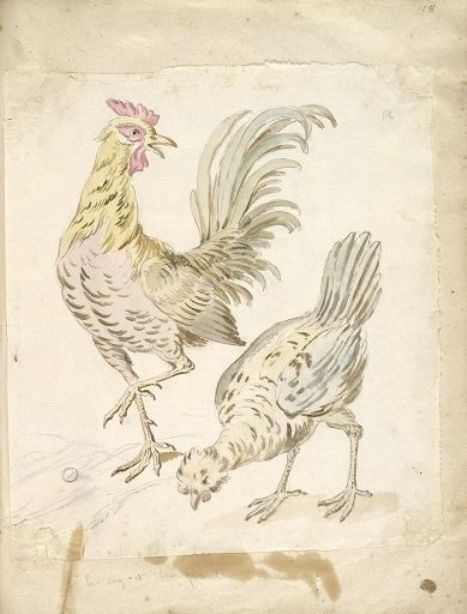 Rooster and Hen by Jean-Baptiste Oudry (1686-1755, France) | WahooArt.com