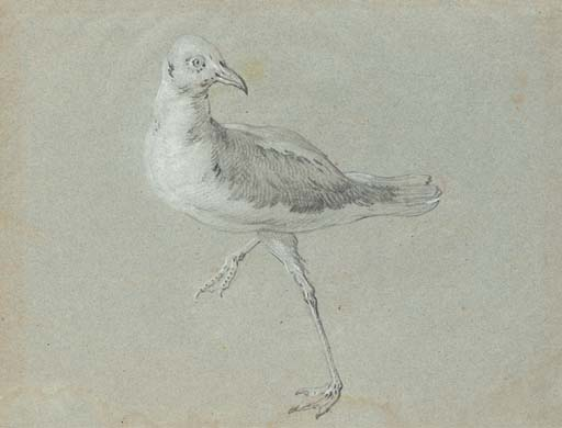 seagull walking to the left facing right by Jean-Baptiste Oudry (1686-1755, France) | Museum Quality Reproductions | WahooArt.com