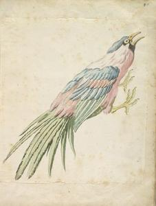 Jean-Baptiste Oudry - Squawking Bird with Talons Extended to the Right