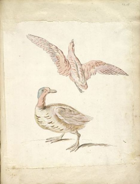 Standing Duck and Bird in Flight by Jean-Baptiste Oudry (1686-1755, France) | Oil Painting | WahooArt.com