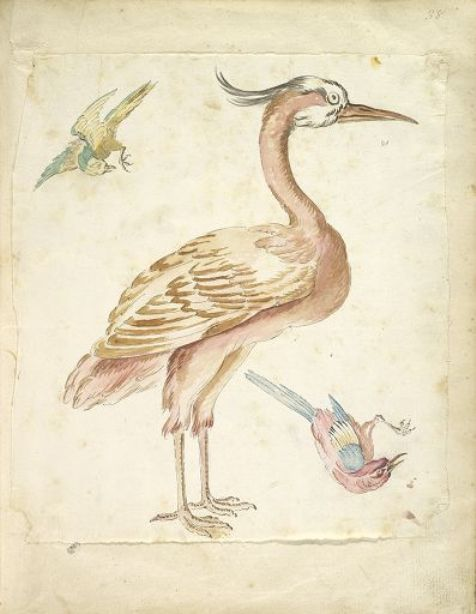Standing Heron and Two Small Birds by Jean-Baptiste Oudry (1686-1755, France)