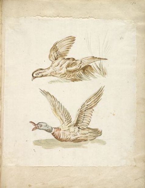 Two Birds Taking Flight by Jean-Baptiste Oudry (1686-1755, France)