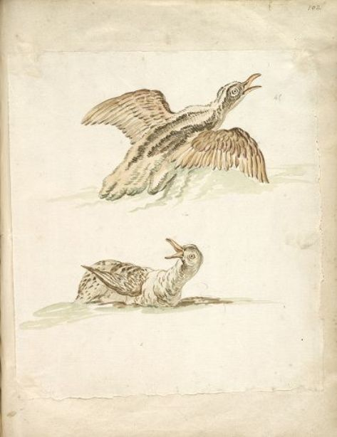 Two Ducks in the Water, One Taking Flight by Jean-Baptiste Oudry (1686-1755, France) | Painting Copy | WahooArt.com