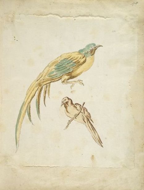 Two Perched Birds by Jean-Baptiste Oudry (1686-1755, France) | Oil Painting | WahooArt.com
