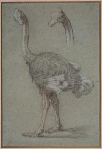 Jean-Baptiste Oudry - Two Studies of an Ostrich