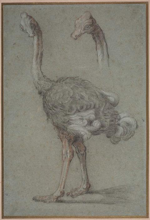 Two Studies of an Ostrich by Jean-Baptiste Oudry (1686-1755, France) | Art Reproduction | WahooArt.com