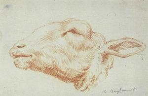 Nicolaes Berchem - Sheep-s head, facing left