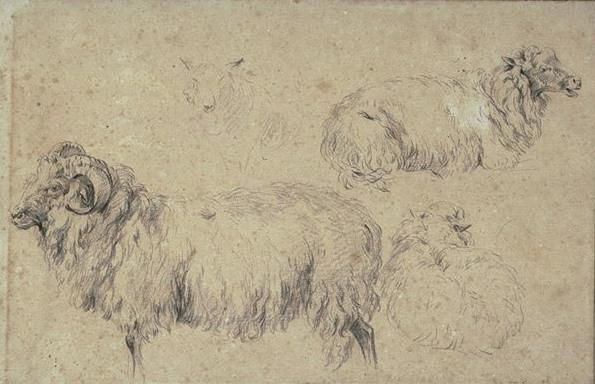 Studies of rams, goats and sheep by Nicolaes Berchem (1620-1683, Netherlands) | Art Reproduction | WahooArt.com