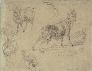Nicolaes Berchem - Studies of three goats, a goat and a goat-s head
