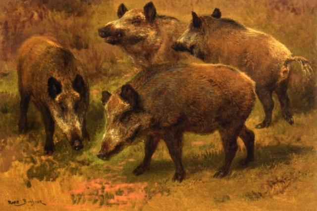 Four Boars in a Landscape, Oil On Canvas by Rosa Bonheur (1822-1899, France)
